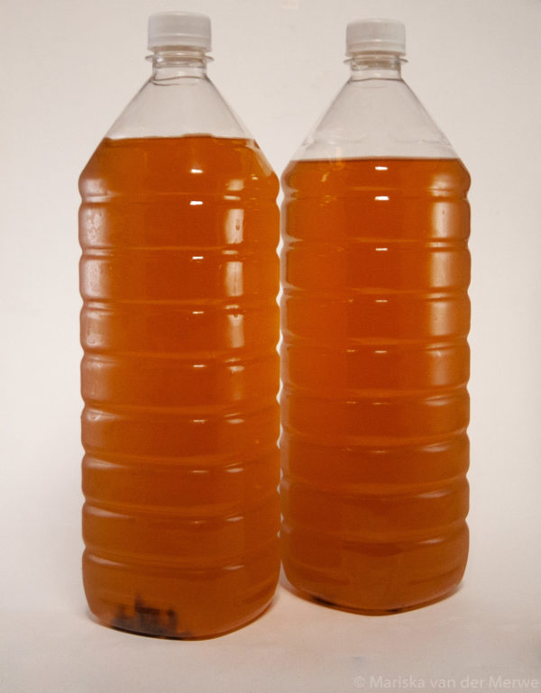 1.5 liter kombucha fermented drink with a white background